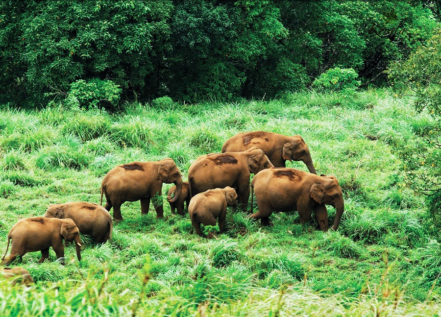 Temples of South India | Tourist Activities in Thekkedy | Periyar | The Travel Planners