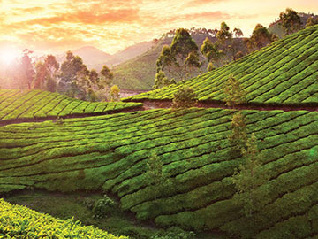 Kerala Luxury tour - Dream Vacations in India